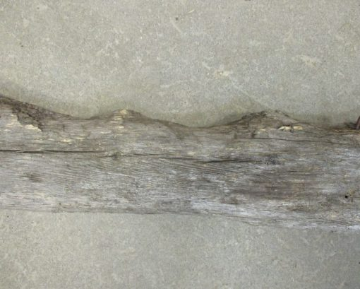 Horse Chewed Wood